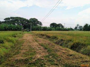 ขายที่ดิน สิงห์บุรี 2-2-70 ไร่ ที่สวยแปลงมุม ติดถนนใหญ่ ต.ประศุก อ.อินทร์บุรี