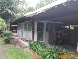 6001531 บ้านขายและให้เช่า  บ้านผีเสื้อ เชียงใหม่ ที่พัก โฮมสเตล์ รีสอร์ท