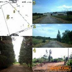 AL026ขายด่วนที่ดิน 83 ไร่ บ้านมาบคล้า ต.คลองกิ่ว อ.บ้านบึง ชลบุรี ไร่ละ 1.3 ล้านบาท