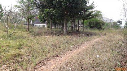 ขายที่ดินเขาใหญ่ บนเนิน #ใกล้ The Cotswold Khaoyai #เขาใหญ่ปากช่อง