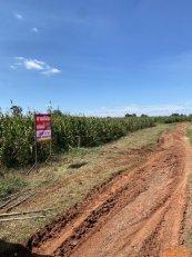 ขายที่ดินโฉนดยกแปลง ทั้งหมด 5 ไร่ สำหรับทำการเกษตร อ.เนินสูง