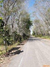 ขายที่ดิน พร้อมสวยยางและสวนปาล์ม บ้านหนองเต่า ม.3 ต.เขาใหญ่ อ.อ่าวลึก จ.กระบี่