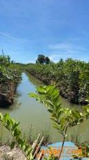 ขายที่ดิน 19-3-24.9 ไร่ สวนผลไม้ อ.สามพราน จ.นครปฐม ที่ดินล้อมรั้ว เหมาะแก่การลงทุน ฯลฯ