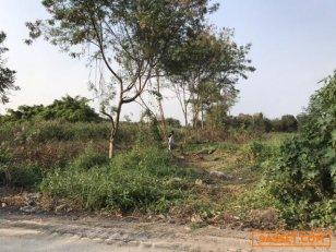 ขายที่ดินเปล่าในกรุงเทพฯ พุทธมณฑลสาย 2 ซอย 19 ทำเลสวย พื้นที่ 6 ไร่ 2 งาน 31 ตารางวา