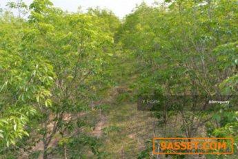 ขายที่ดิน YE-72 สวนยาง 58 ไร่ ต.ปะโค อ.กุดจับ จ.อุดรธานี  58 ไร่ 3 งาน 76 ตร.วา ยางพร้อมกรีด ถูก