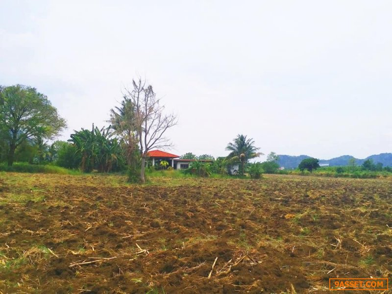 ขายที่ดินพร้อมบ้านชั้นเดียว ทำเลดี บ้านกลางดง 2 ไร่ 1 งาน 84 ตารางวา อ.ปากช่อง จ.นครราชสีมา