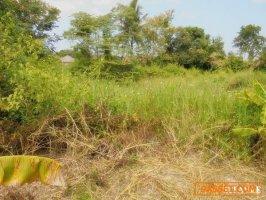 22404 ขายที่ดินใกล้มหาวิทยาลัยแม่โจ้ เชียงใหม่ Land near Maejo University Chiangmai