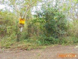 22407 ที่ดินใกล้เทศบาลแม่ก๊า สันป่าตอง เชียงใหม่ Land MaeKa Sanpatong Chaingmai THAILAND
